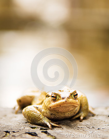 Free Toad Stock Photography - 30131382