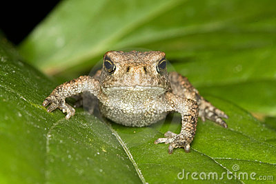 Toad on the leaf