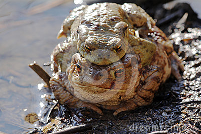 A toad-pair