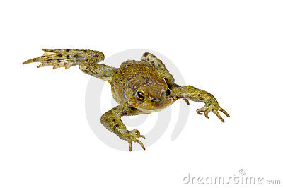 Toad on a white