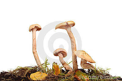 Toadstools