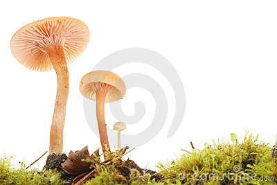 Toadstools closeup