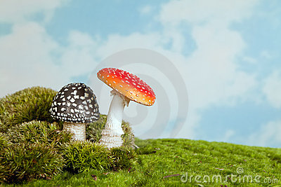 Toadstools for a fairytale