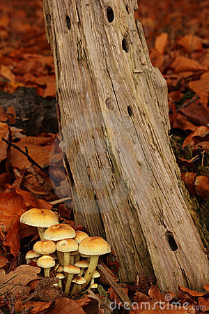 Toadstools in a forest.