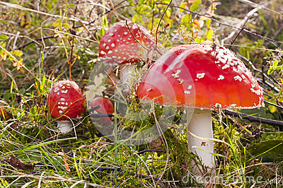 Toadstools in grass