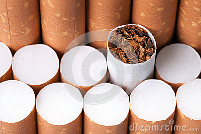 Tobacco in cigarettes close up