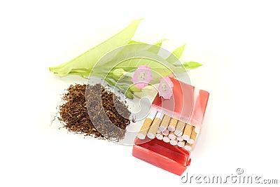 Tobacco with cigarettes case