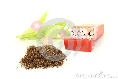 Tobacco with cigarettes case and plant