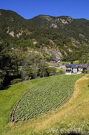 Tobacco crop in Andorra