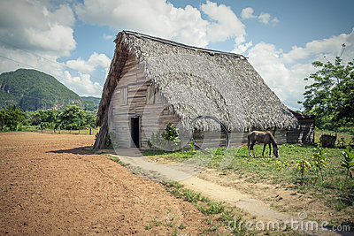 The tobacco farm