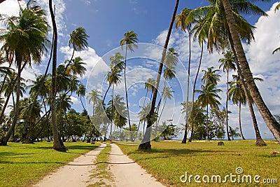 Tobago palms