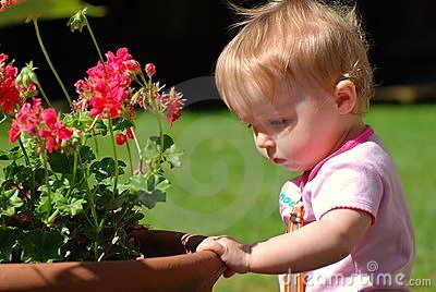 Toddler looking at geraniums in pot