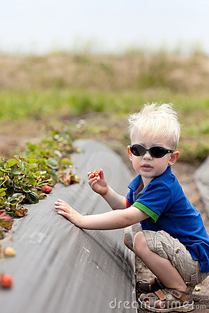 Toddler picking strawberries