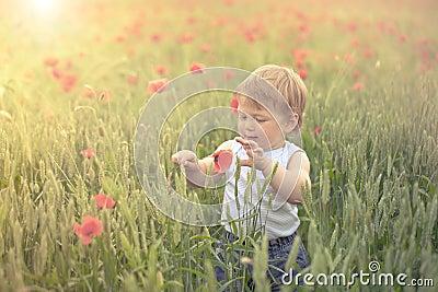 Toddler in poppy field