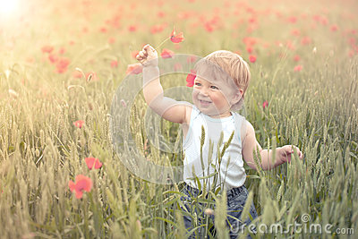 Toddler in poppy field
