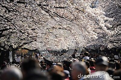 Tokyo crowd under cherry trees