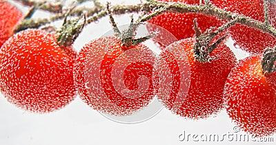 Tomat drop