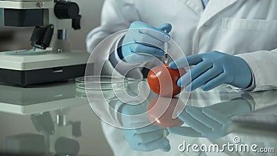 Tomate de pompage d'assistant de laboratoire avec des additifs pour prolonger la durée de conservation, qualité des produits alim banque de vidéos