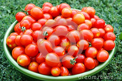 Tomates de cereja ecológicos em uma bacia