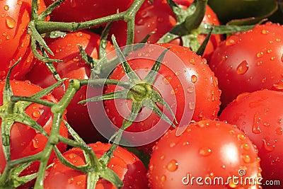 Tomates molhados, frescos
