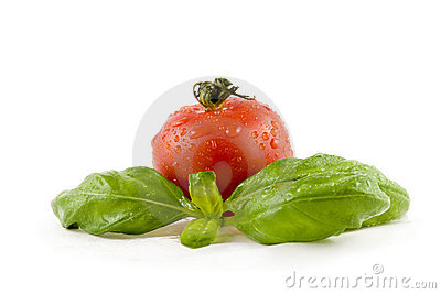 Tomato with basil isolated on white