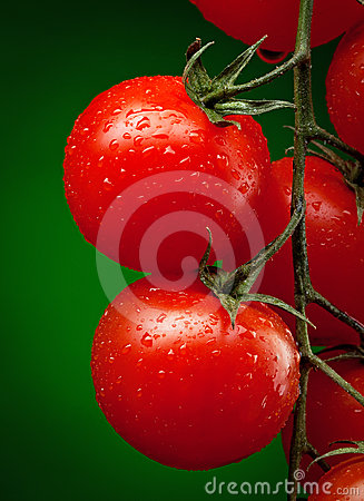 Free Tomato Branch With Water Drops Stock Images - 24391994