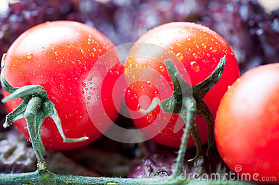 Tomato Brunch Royalty Free Stock Photo - Image: 26916355
