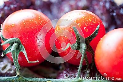 Tomato brunch