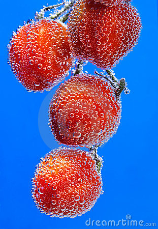 Tomato bubbles on blue