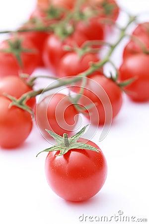 Tomato on focus