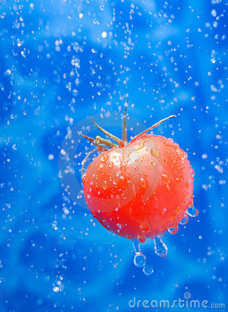 Free Tomato In A Water Splash Drops Stock Photos - 6680483