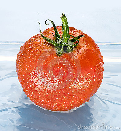Free Tomato In Water Stock Photo - 20249480