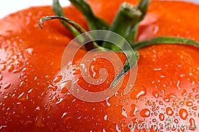 Tomato with scape