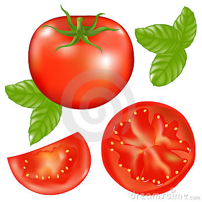 Free Tomato With Basil. Vector Royalty Free Stock Image - 14630546