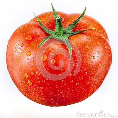 Free Tomato With Drops Isolated On White Stock Photo - 37770820