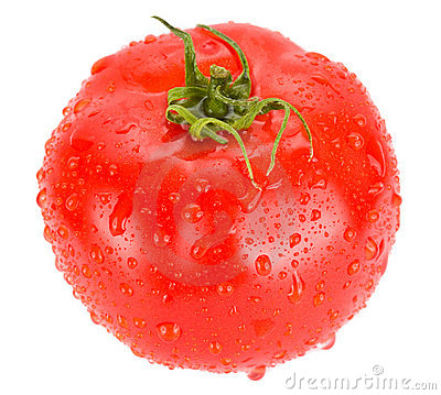 Free Tomato With Water Drops Isolated Stock Photography - 8306542