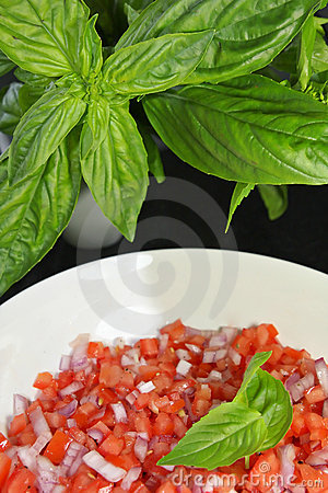 Tomatoe Salsa With Basil
