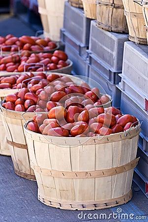 Free Tomatoes Stock Photos - 16010623