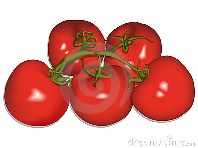 Tomatoes against white vector
