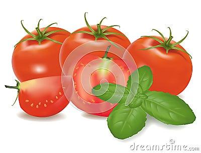 Tomatoes and basil leaf.