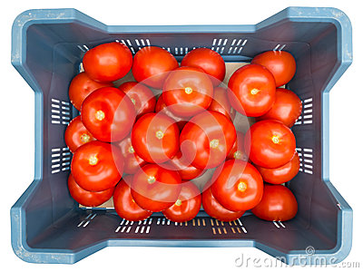 Tomatoes in Box Top