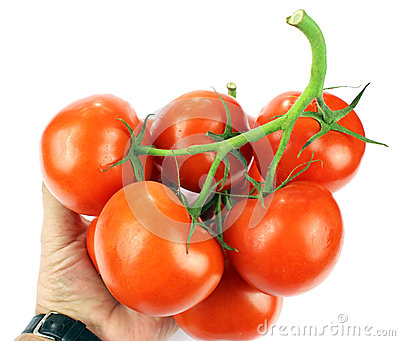Tomatoes in the human hand