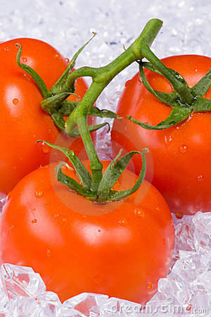 Tomatoes on ice