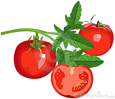 Tomatoes with leaves