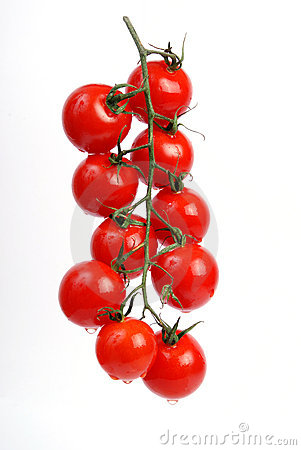 Free Tomatoes On The Vine Stock Photography - 2583522