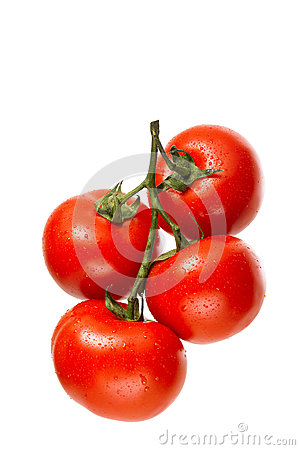 Free Tomatoes On The Vine Royalty Free Stock Photos - 31182338