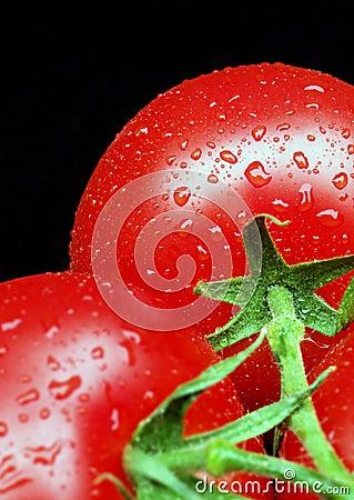 Free Tomatoes On Vine Stock Photos - 963563