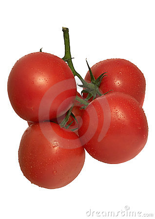 Tomatoes tuft -isolated