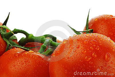 Tomatoes on the vine with water droplets