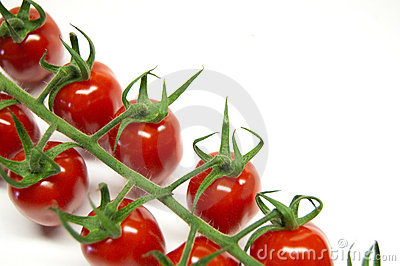 Tomatoes on the vine on a white background